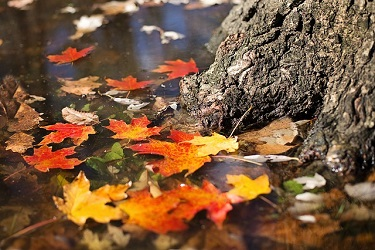 Nov. 1 leaves falling